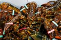 EU parliament backs lobster deal and EU-US mini trade pact
