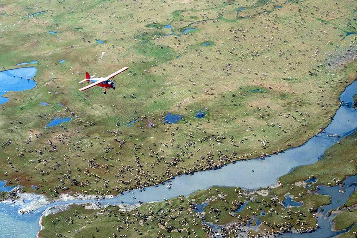 us holds first oil lease sale for alaskas arctic refuge 2021 01 06 2 primaryphoto