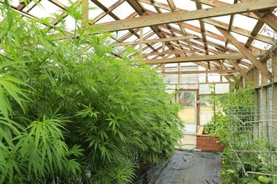 Grow Generation Stock a Domestic Cannabis Cultivation Play