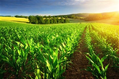3 Agriculture Stocks to Consider Buying in 2021