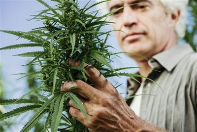 Hydrofarm Stock is a Compelling Domestic Cannabis Cultivation Play