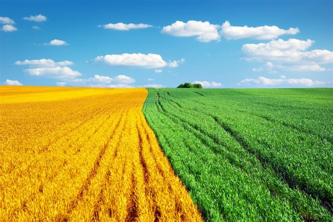 3 Agriculture Stocks to Bet the Farm On